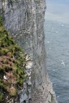 Flamborough Head: the cliffs of Roverandom